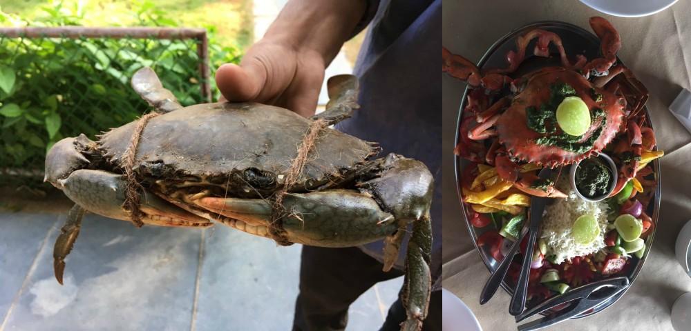 fresh-crab-and-dish